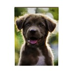 Agenda 2020 Lannoo My favourite friends dog bruin